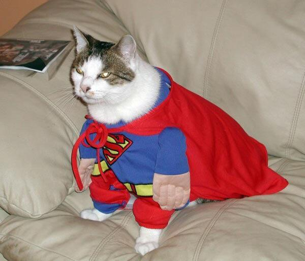 Super Cat: My Planet Needs Me - Android Apps on Google Play