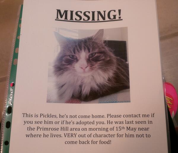 @marcthevet @InPrimroseHill @primrosehillpet Pls RT! He's microchipped, contact via twitter thank you!x #Pickles #Cat http://t.co/Y7R9YShRg2