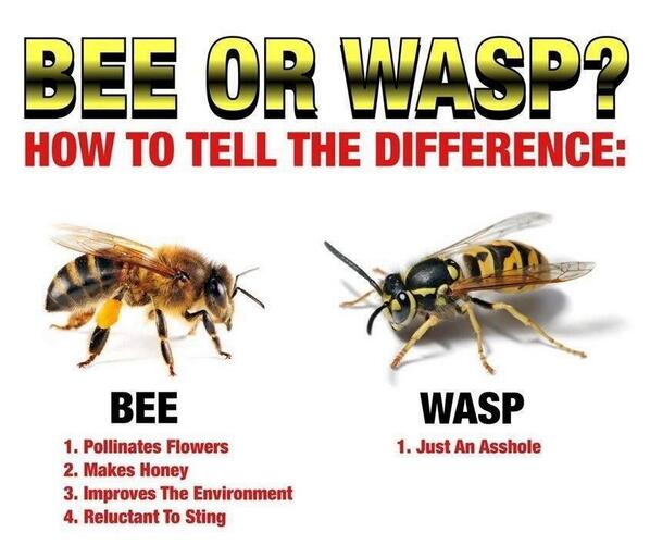 Bee or Wasp? http://t.co/umSCxGhp3q