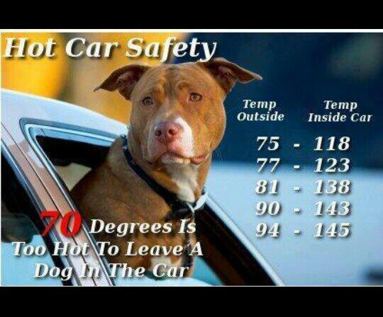 Not just dogs are affected. Cats, kids, birds, etc. You will also be fined and/or arrested! Be kind to your pets. http://t.co/4iJPIWxxNZ