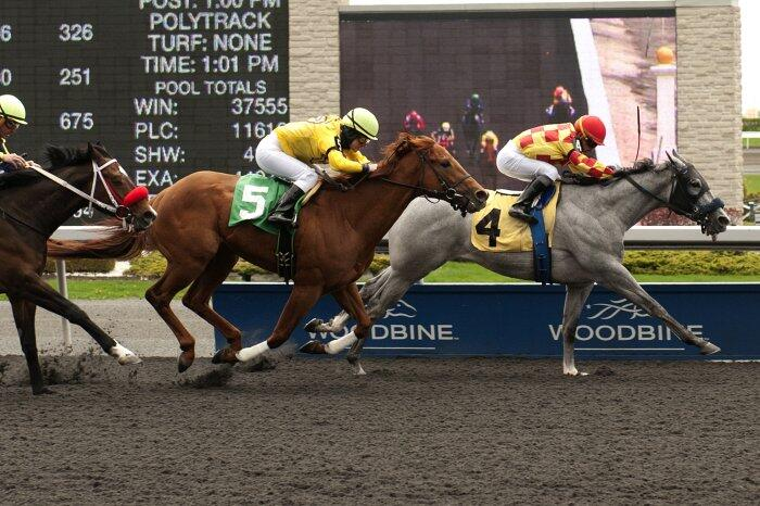 Twitter / WoodbineRacing: Winner winner! MT @copperwaterTB ...