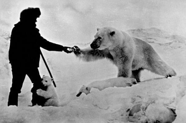 The coolest thing I've seen today @ThatsHistory Astonishing photo showing a man feeding a polar bear. Russia 1970s. http://t.co/WqVyynCPnG