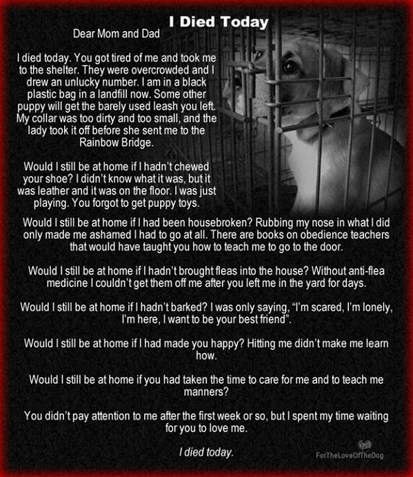 """I died today.""  #LIFETIME  #pets  @joannakrupa http://t.co/qfvMnjll1a"
