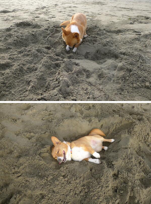 穴を掘って寝るw pic.twitter.com/ro0UglvROw