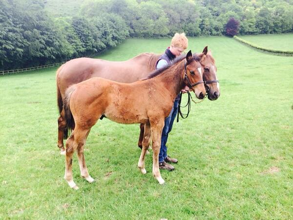 Model Queen and her amazing Frankel foal. http://t.co/DCh0oCavso