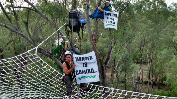 Twitter / GreenpeaceAustP: Our activists are in the canopy ...