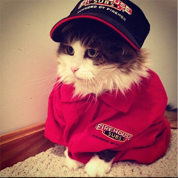 Cats with Jobs #tumblrsthatshouldexist http://t.co/smsMFB4S6D