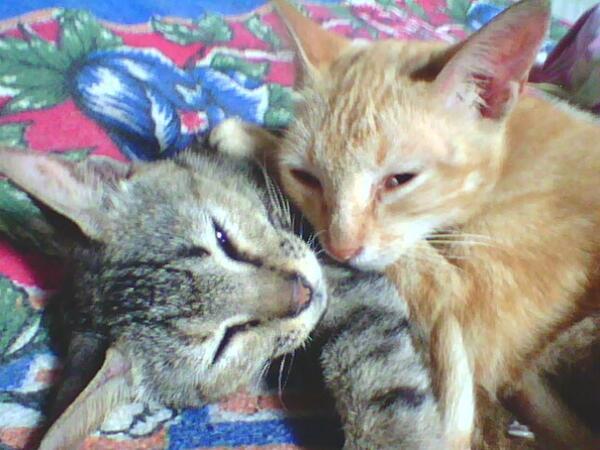 Red One On Twitter Slametwati Udah Jadi Hak Paten Nama Kucing Gue Kmaren Bang Radityadika Ni Fhotony Http T Co C6w4sdxgco