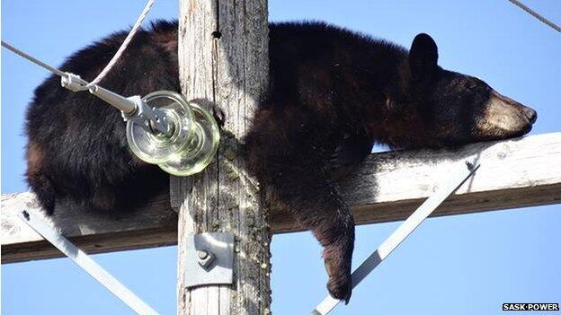 Twitter / SocialForHumans: Bear finds 'interesting' place ...