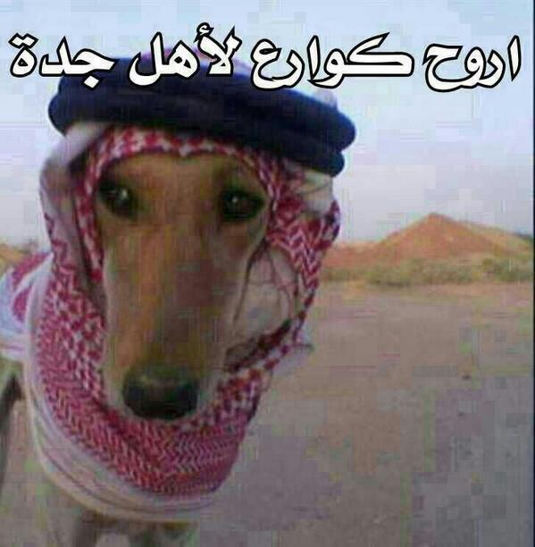 كلب لابس شماغ ,صورة كلب