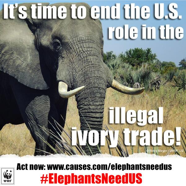 Every year 35k elephants are killed for #ivory; help @World_Wildlife end this http://t.co/mJMqgHXdy2 #elephantsneedus http://t.co/TcOvNmJZVV