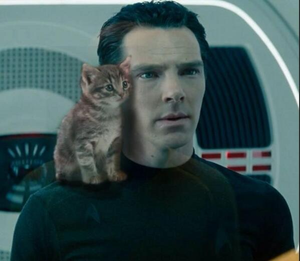 Image result for Cumbercat
