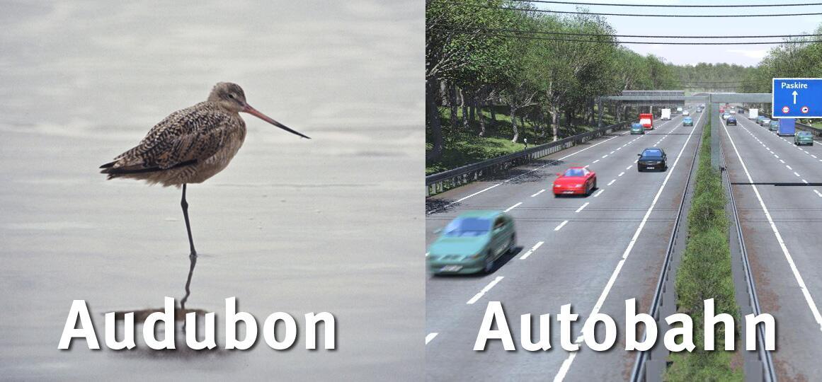 Audubon California on Twitter: