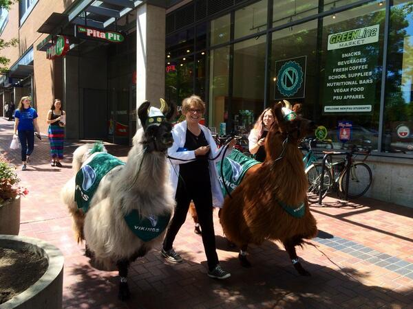 Lori and Llamas on Portland Street