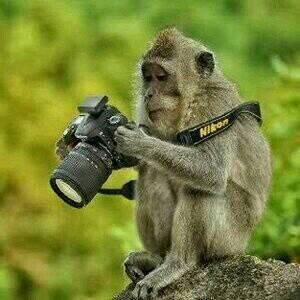 I trained a monkey to become a professional photographer #interviewMeGBC http://t.co/Tme4rWkQn8