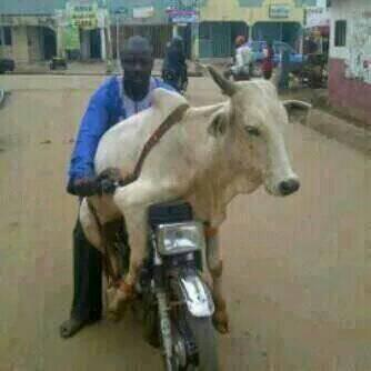 I've trained cows all over Ghana to enjoy motor rides. #interviewMeGBC http://t.co/qoGtE8CUHu
