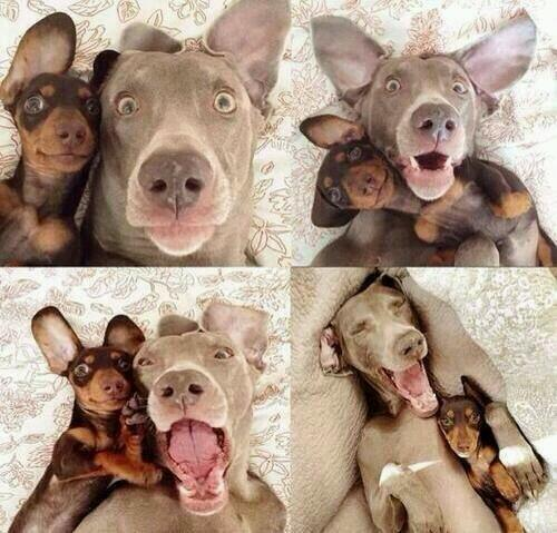 Funny Quotes On Twitter Taking Selfies With Your Best Friend Http