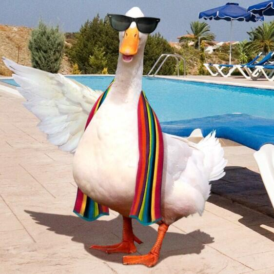 aflac duck on twitter i m partial to a one piece bathing suit the