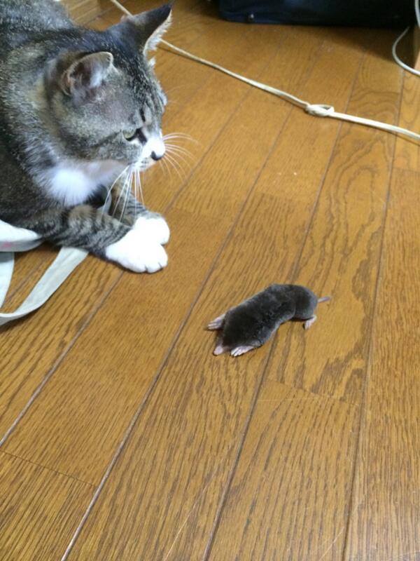 猫が家にモグラ持ってきたwwwwwwwwwwwwwwwwwwwwwwwwwwwwwwwwwwwwwwwwwwwwwwwwwwwwwwwwwwwwwwwwwwwwwwww pic.twitter.com/oI0L31YREf