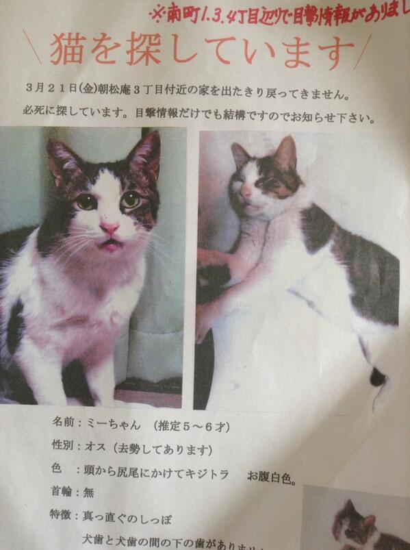 地元付近。RT @tororothecat: 知り合いが猫を探しています。杉並区松庵〜西荻北周辺での目撃情報があります。どんなに些細な情報でもかまいませんので、よろしくお願いいたします。 http://t.co/5S5uKb6nOY