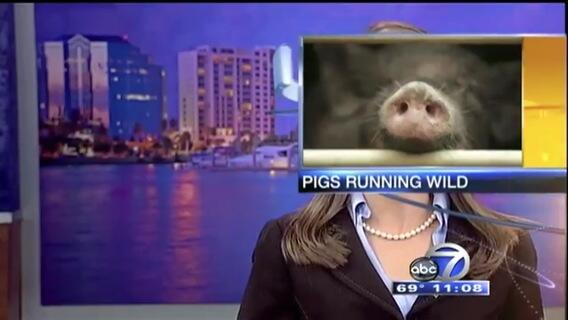 When TV news graphics go wrong. http://t.co/YwrZr99irT