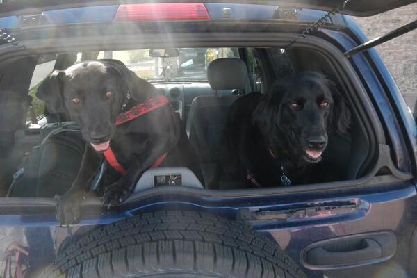 Some very excited #hiking puppies. #dogs #pets #Colorado http://t.co/33KH1WTnmC
