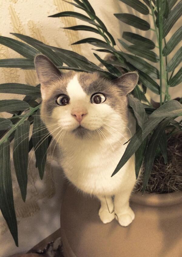 """@LuvKittensDaily: Cross-eyed http://t.co/C1jG4JGExH"" CUTE!!"