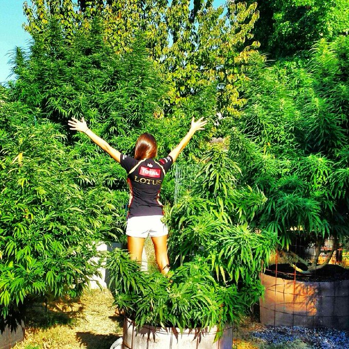 #California 4:20! That time of year again, growers get ready, set, Grow! #420 #StonerNation http://t
