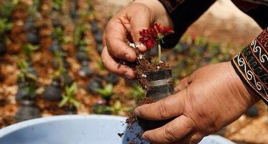 Palestinian woman grows flowers in empty tear gas shells. http://t.co/ydmMSsuy1Z