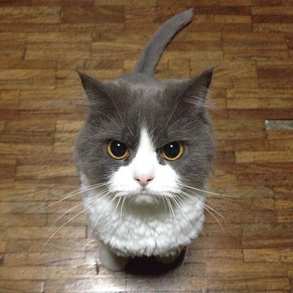 猫缶を買ってくるの忘れたと言ったら pic.twitter.com/EUySXP4UbI