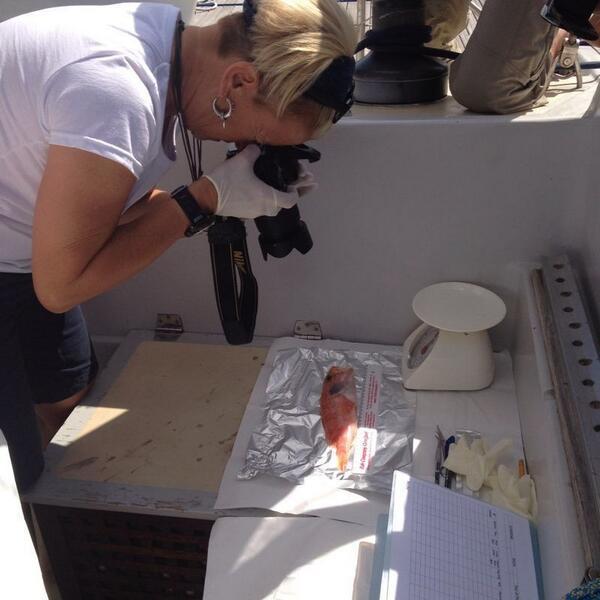 #PlasticBusters al lavoro nel mare pugliese con #progettomediterranea @ANSA_med http://t.co/vesdWb9FjM http://t.co/wOBi6vNkGm