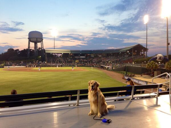 Mad Kirker On Twitter Beautiful Night At The Myrtle Beach Pelicans Stadium For Bark In Park