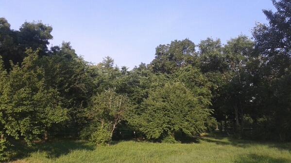 Bună dimineața, soare!  Ne plimbăm prin parc.  :) http://t.co/LMyVyrO1M1 http://t.co/R1PVukdQuc