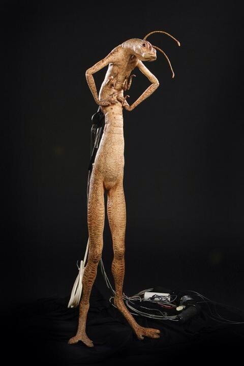 @Bombfantasyyy @_Janaiah look at her avi she looks like this lmfao http://t.co/yI6LpkqyP4