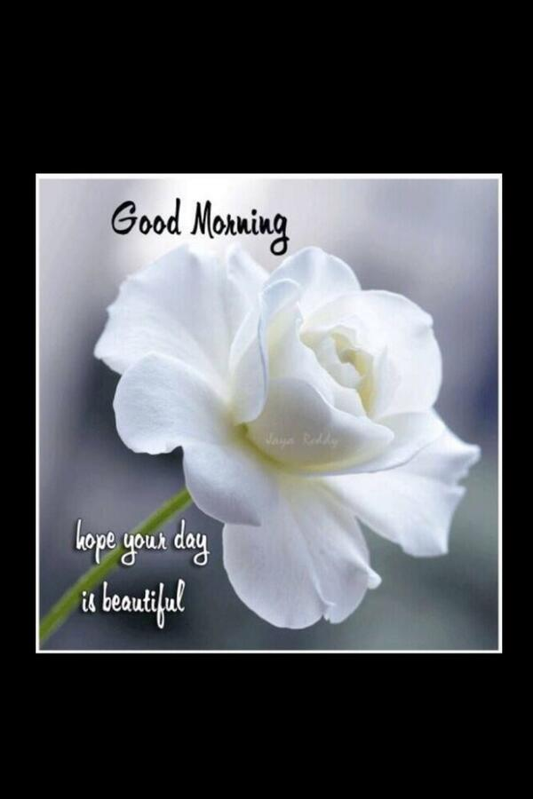 Rehmat On Twitter Good Morning Friends Sorry For Being Lazy