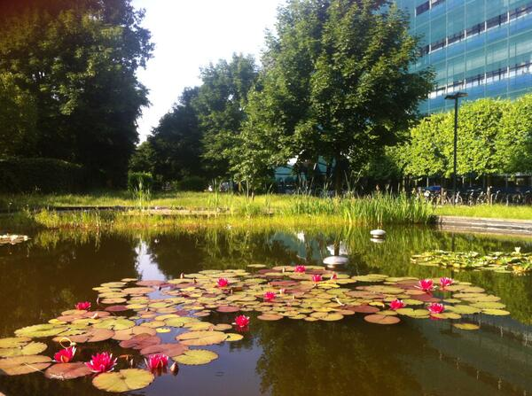 The view from our pond: RT @mpicbg it IS a beautiful sunny day today in Dresden. http://t.co/mXZegpVPDn #eLifetakeover