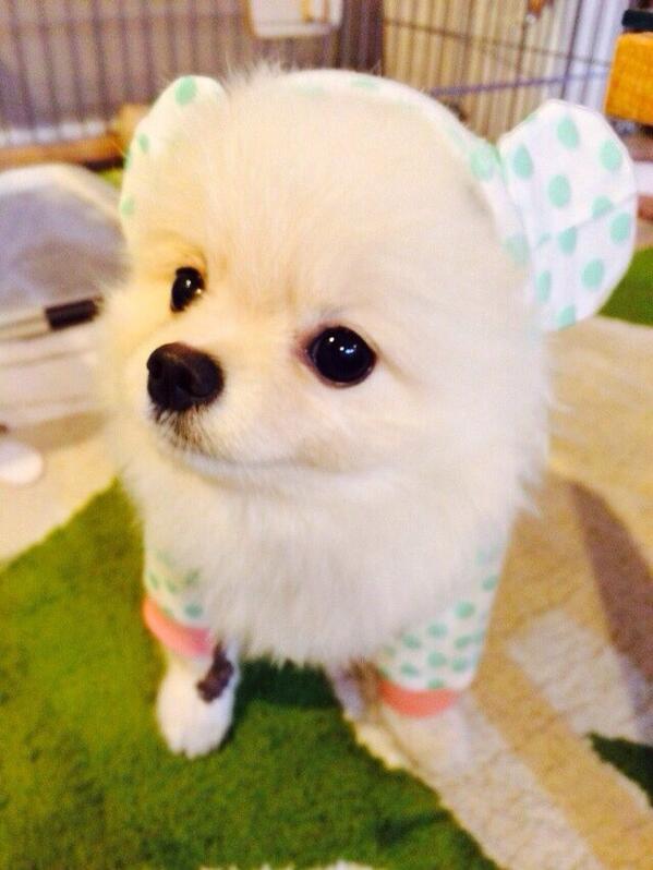 あ〜可愛いハクちゃん!! モデルさせたいわ〜!!#flumpool pic.twitter.com/i4l5xUhO5X