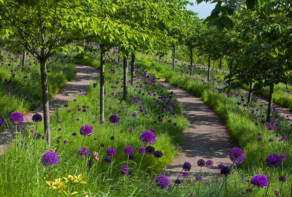 """""""@GraemePeacock1: A flowing field of ornamental onions Try the #AlnwickGarden @AlnwickGarden http://t.co/QBq6xANrGm"""" > Love this!"""
