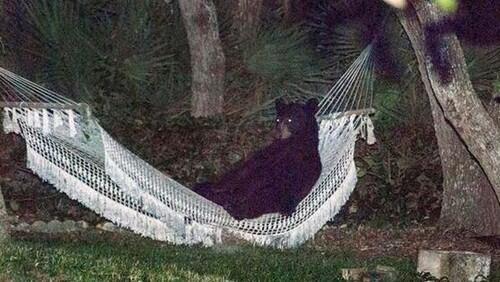 Urso invade casa na Flórida e aproveita rede. http://t.co/CG0BgQeFCQ http://t.co/BJcCgvPZ8w
