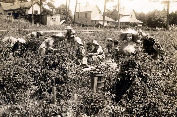 The student Farmerettes heeded Pres Wilson's call for more food production by working the campus farm. #ww1archives http://t.co/gOfb7DOd6f
