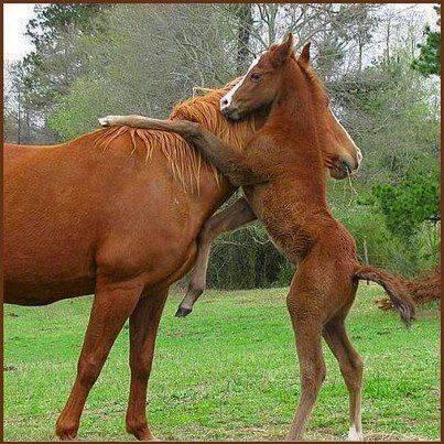 #Pony #Hug  @Tracy719 @People__Tweet @AAA_Stripe_Pro http://t.co/62pN2nUj5h