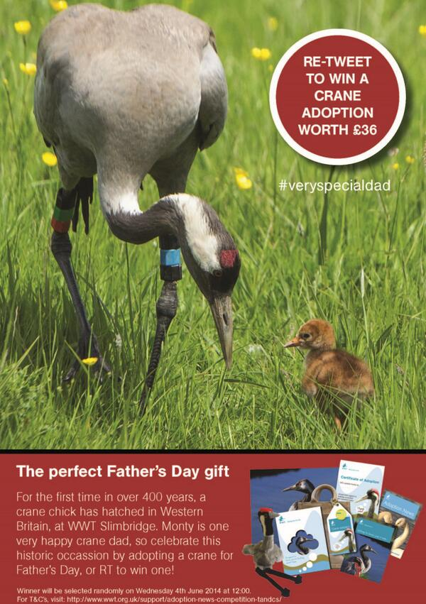 Is your dad a #veryspecialdad? RT to WIN a crane adoption worth £36 – great father's day gift http://t.co/GAKMg1nJFT http://t.co/9cU3XB5Tu6