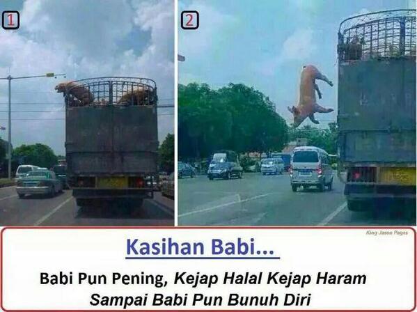Gempar! Babi bunuh diri! http://t.co/YpGjnirorC
