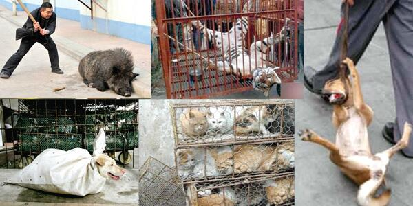 Animal welfare and rights in China