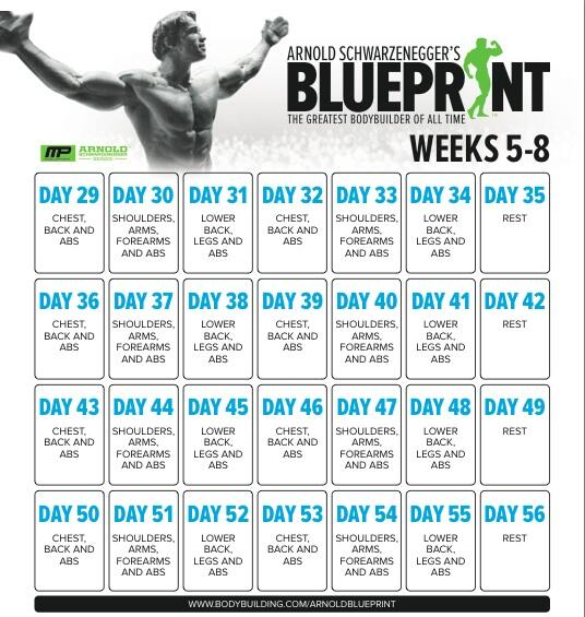 Musclepharm on twitter anybody going through 2nd round of musclepharm on twitter anybody going through 2nd round of schwarzenegger blueprint to mass program arnold blueprint to cuts coming soon malvernweather Images