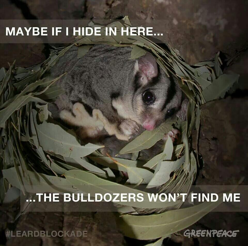 Twitter / GreenpeaceAustP: The lives of animals like this ...