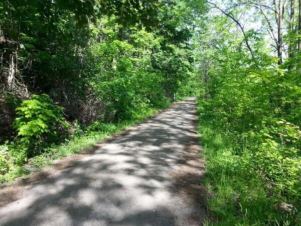 Dappled shade on the Escarpment Trail