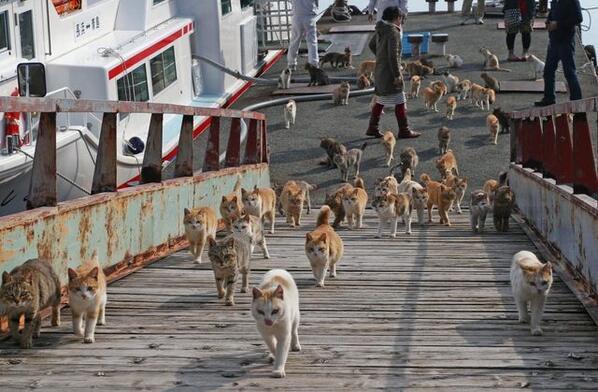 猫好きにはたまらない!愛媛県にある猫島には人間15人に対して猫が100匹以上もいる!happyeveryday.biz/?post_type=pos… pic.twitter.com/fOBONlmGl0