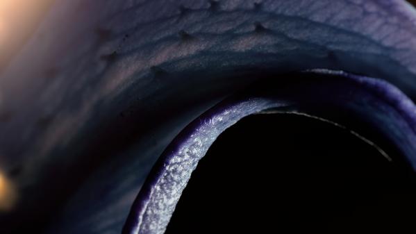 Boom Boom Satellitesの新しいビジュアル+アーティスト写真+期間限定公開の新曲MV作らせていただきました。一挙公開です。 http://t.co/0obkfKWEH4 http://t.co/kIys9BYXLX