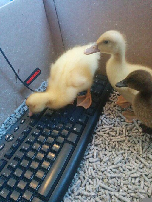 Here's a really good example on how to implement duck typing in your code